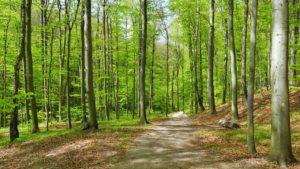 Oltre 8 mila ettari di foreste italiane patrimonio dell'umanità Unesco